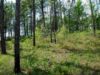 "Just upslope from the edge of ""South Goat Glade, "" April 26, 2007."