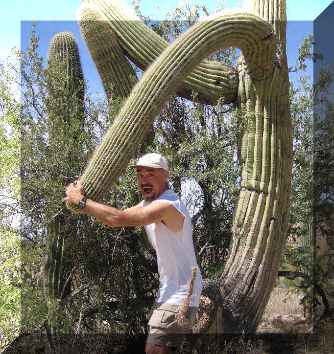 Rasslin' a giant saguaro at Saguaro National Park (Arizona), 17 March 2006